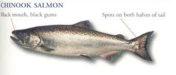 Süßwasserfischarten in British Columbia, Kanada